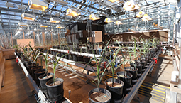 Plant Phenotyping Research